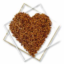 Coriander-Seed